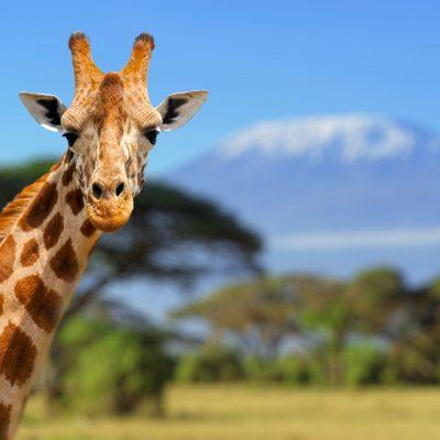 viajar a Tanzania con Bhárad