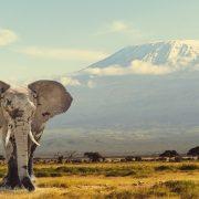 Elefante en Tanzania, uno de los destinos de luna de miel de Bhárad