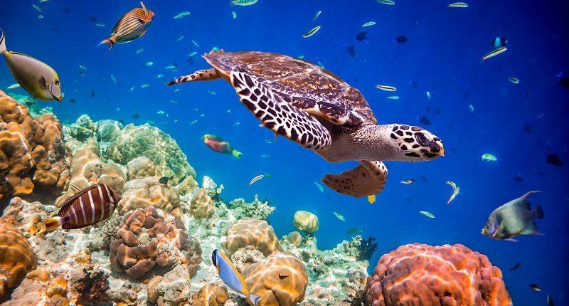 Buceo en Maldivas, un destino de playa de Bhárad