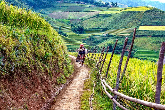 Viajar a Vietnam - campos de arroz