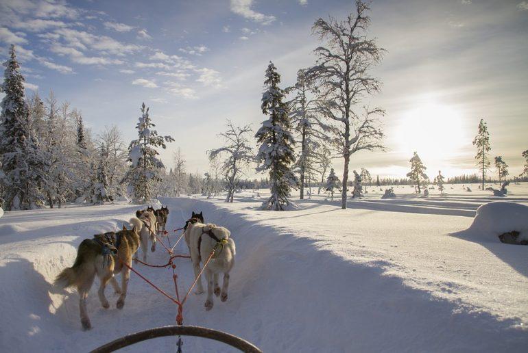 Viaje a Laponia en familia. Perros trineo