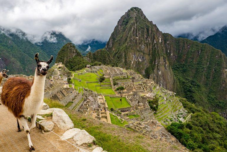 Viaje a Peru - Llama