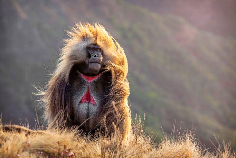 Viaje-con-guía-acompañante---Mono