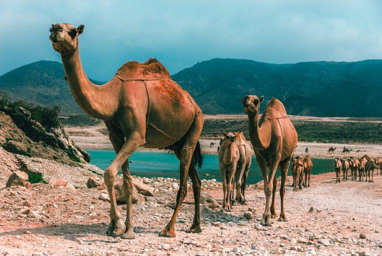 Viaje a medida a Omán