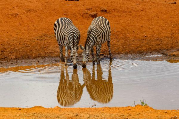 Viajes de novios a Kenia. Parque Nacional de Amboseli